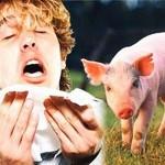 إنفلونزا الخنازير ٢٠١٠